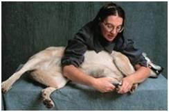 restrain dog to trim nails