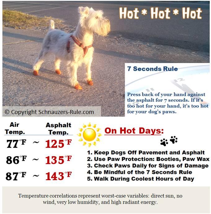Dog Paw Safety on Hot Pavement