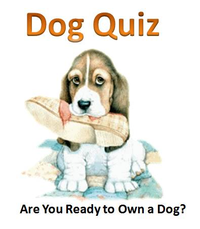 Ready to Own a Dog Quiz