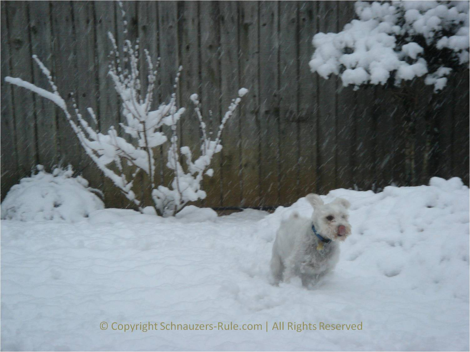 Dog Winter Safety
