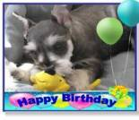 happy birthday dog ecard