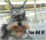 Congratulations e-card, dog ecard, schnauzer card