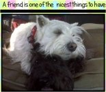Friendship ecard, dog ecard, schnauzer card