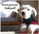 Get Well ecard, dog ecard, schnauzer card