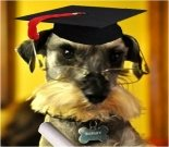 Graduation ecard, dog graduation ecard, schnauzer card