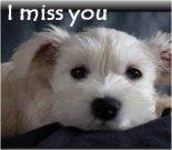Miss You ecard, dog ecard, schnauzer card
