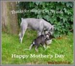 Mother's Day ecard, dog ecard, schnauzer card