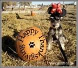 Thanksgiving dog ecard, dog ecard, schnauzer card