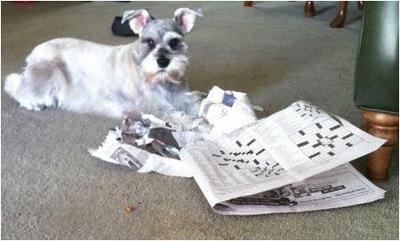 Greta with her paper