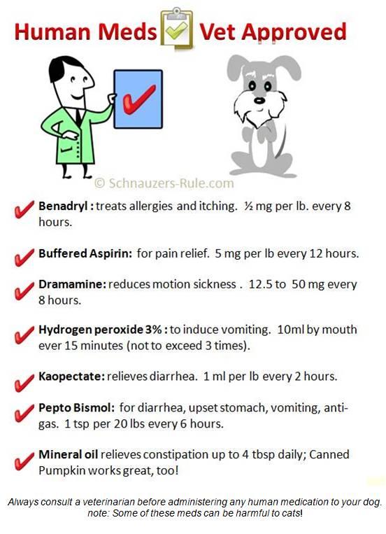 Human Medication Safe For Dogs