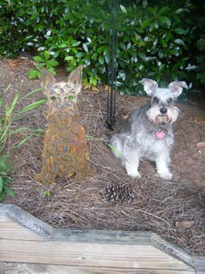 Miniature Schnauzer, Will the real Bella please stand up!