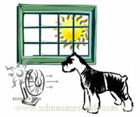 Keep Dog Cool Without AC
