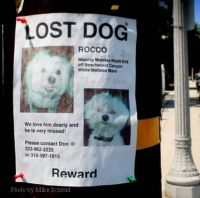 Finding a Lost Dog or Puppy