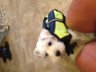 Suited up for swim lessons