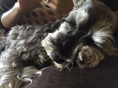 Sleeping on the foot