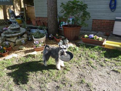 It's a Frisbee not a plant pot.. !