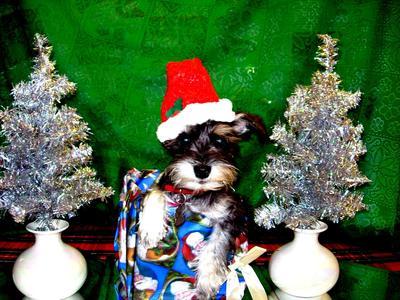 Here I am again, Danka II Wishing y'all a Merry Christmas