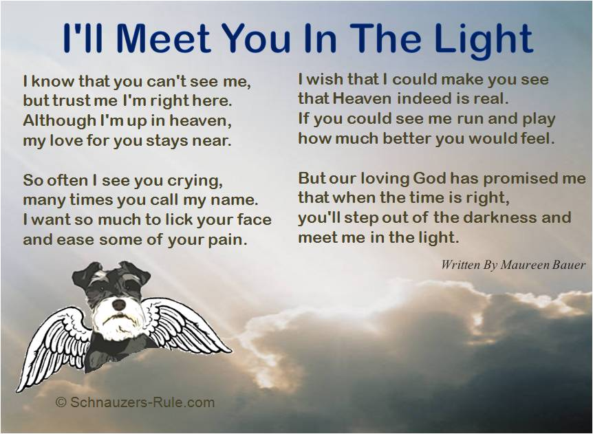 Pet Loss Poem I'll Meet You In The Light by Maureen Bauer