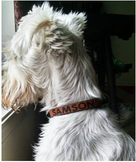 Customized Ruha Dog Collar