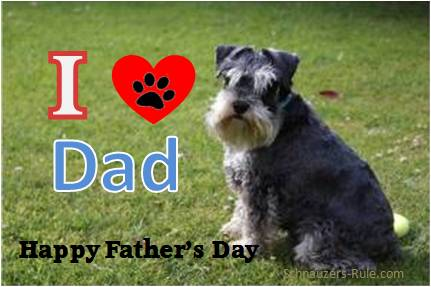 Happy Father's Day from Your Mini Schnauzer