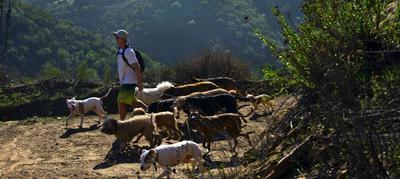 Pack Hike