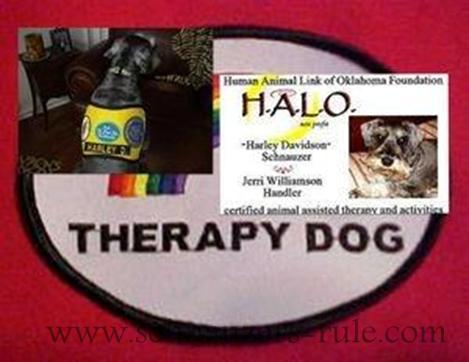 Therapy dog Harley's Gear