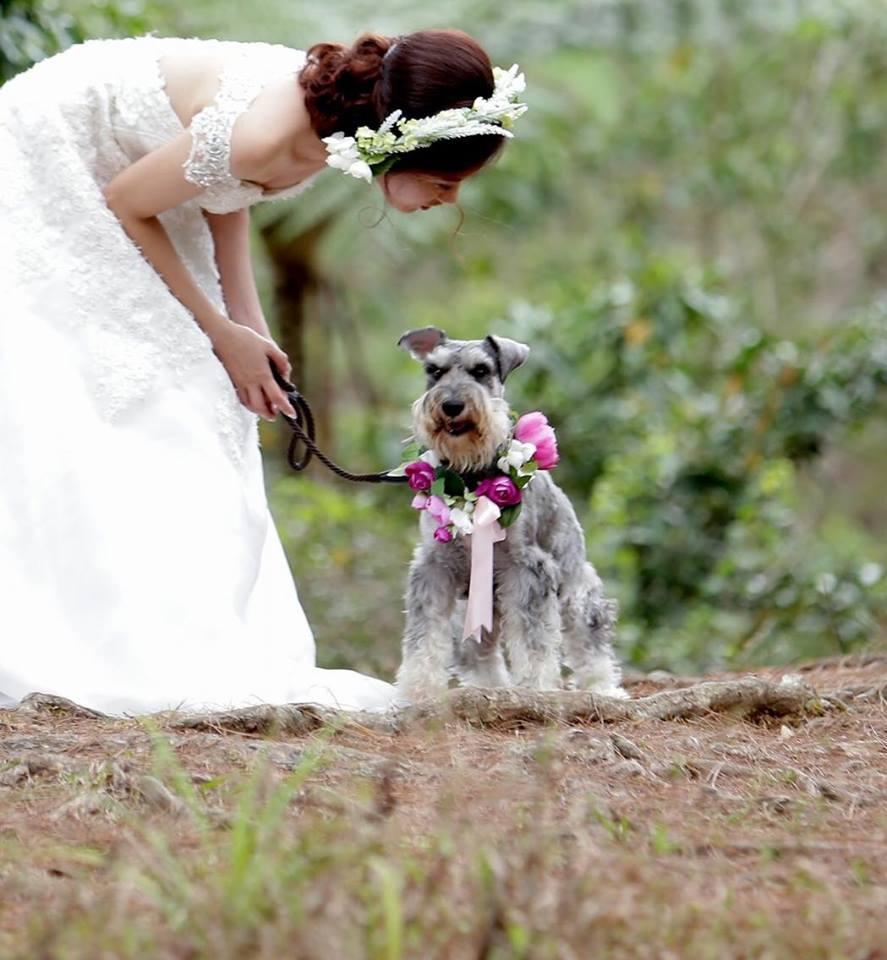 Schnauzer wedding